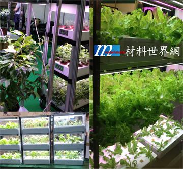 """圖一 植物工廠展區處處""""綠意盎然"""""""