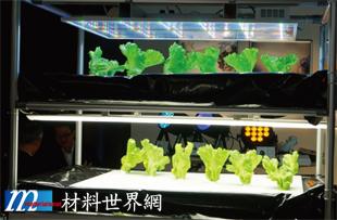 圖十二、日本 Bluewave Technologies公司將 LED燈應用在植物的生長